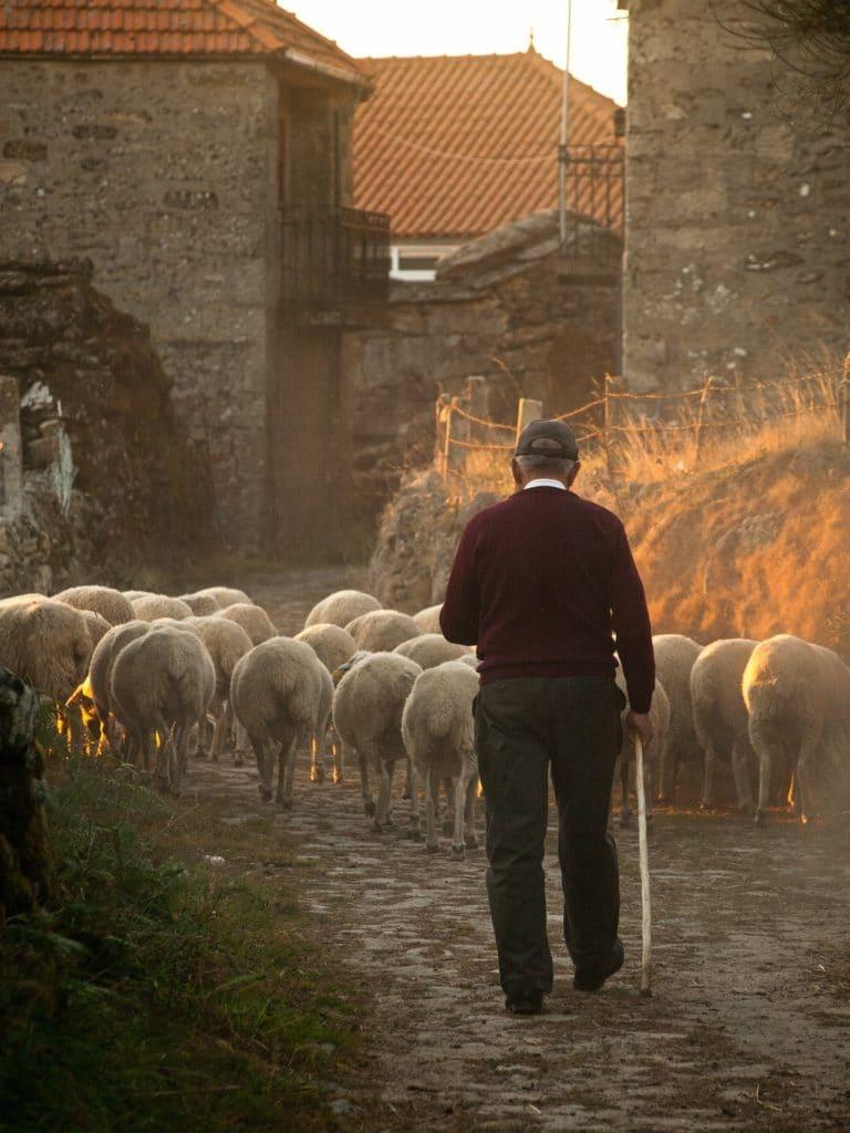 Katram savas aitas un katram savi gani